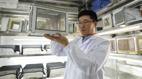"""蚊子的""""相亲大会""""还有这么多讲究!上海科学家揭示疟疾媒介按蚊的求偶秘密"""