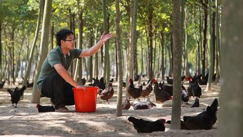 明月谈丨上海的芦花鸡去哪儿了?