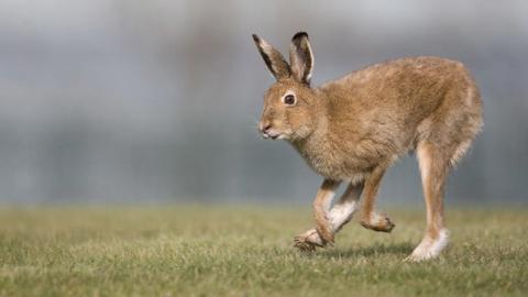 十日谈 奔跑吧,野兔