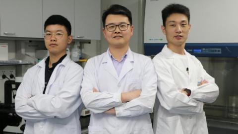 """上海研发成功新一代光遗传学工具 为基因治疗和细胞治疗提供新型""""武器"""""""