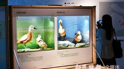 """打开""""我的自然百宝箱"""" 探秘上海生物多样性"""