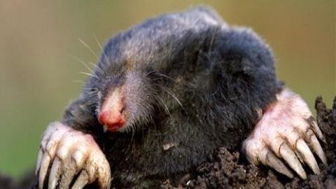 十日谈 | 饮河的鼹鼠