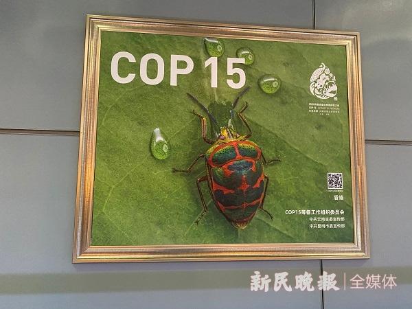COP15丨第一阶段会议昨在昆明闭幕 会议取得三方面重要
