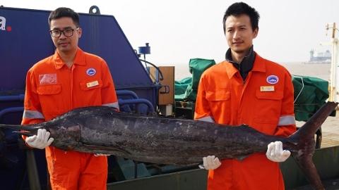 """""""淞航""""号凯旋 科学家在西太平洋公海发现潜在渔场"""