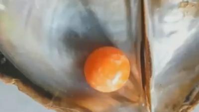渔民捡贝壳捡到宝,回家发现内藏稀有橙色珍珠