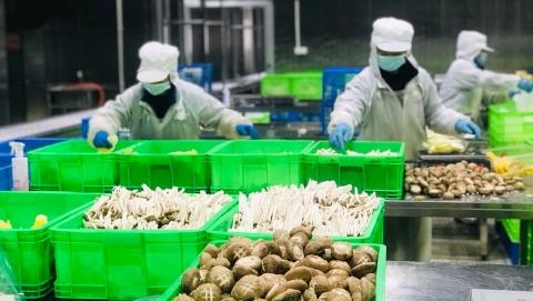 """延长产业链,蔬菜""""涨身价""""!松江首个净菜加工基地正式投入运营"""