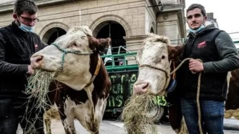 """法国环保派""""不让孩子吃肉""""惹骂战"""