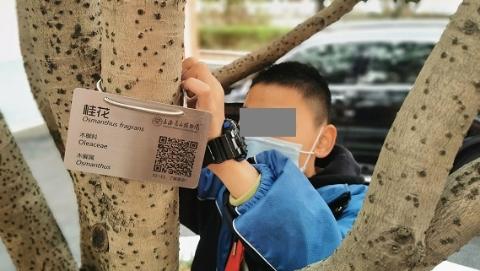 """校园植物你叫得出几种?别急,辰山植物园的专家可帮它们制作""""身份证"""""""