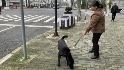 """导盲犬""""方便""""风波有了新进展!如何加强城市无障碍环境建设引人深思"""