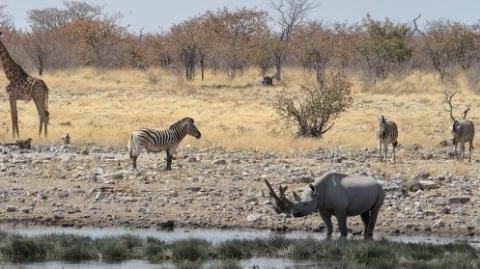 世界自然保护联盟报告:疫情影响全球自然保护工作