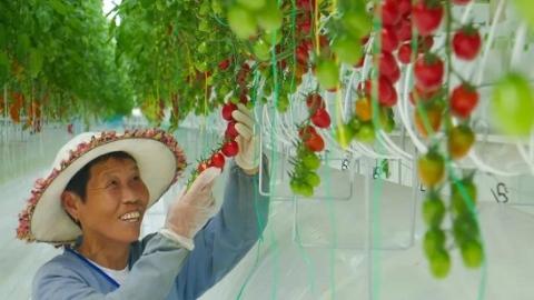 """【铿锵奋进的脚步 续写春天的故事】就在上海!中国最大单体温室,世界顶级农业""""黑科技"""""""