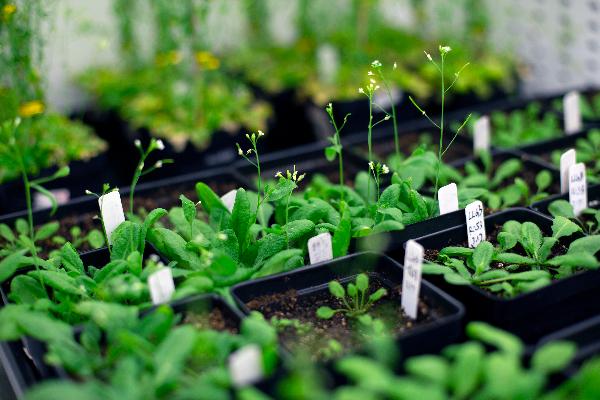 逆向思维找到突破口 上海科学家首次破解植物亲和花粉授粉机制