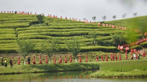 一片茶叶拉动全产业链 茶乡武义以茶为媒促茶旅融合发展