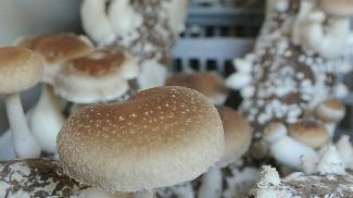 又到法国香菇季,煮熟吃以防皮肤过敏