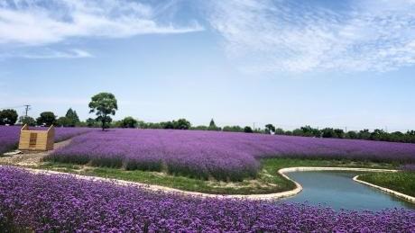 五一小长假去哪玩?上海12条美丽乡村休闲旅游行(春夏季)线路发布!