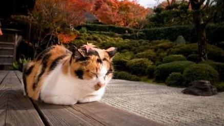 京都南区的猫