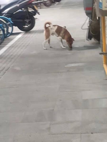 """出门遛狗 勿忘给爱犬佩戴""""小小犬牌"""""""
