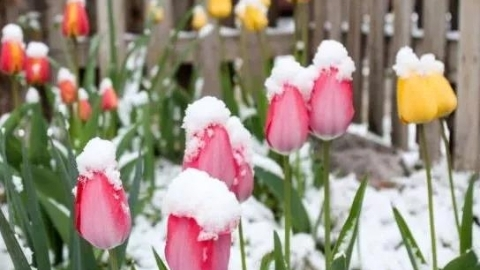 奥地利经历25年来最寒冷春天!