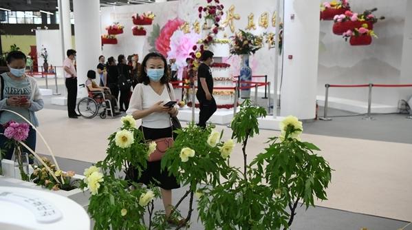 看花眼 | 牡丹和芍药傻傻分不清?花博会这场限时展览等你来!