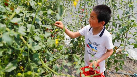 瓜果采摘、土灶烧菜、钓小龙虾…… 松江这个376亩的农场乐趣挖不完!