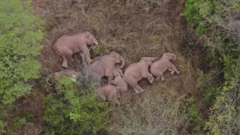 新民快评 | 大象与花博,折射生态环保理念深入人心