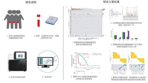 中国晚期转移性前列腺癌基因突变图谱成功绘就 可为患者提供最适合的治疗方案与药物 延长生存时间