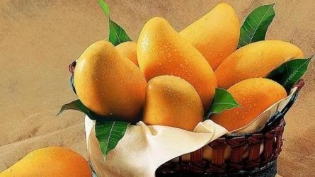 胡展奋: 吃芒果
