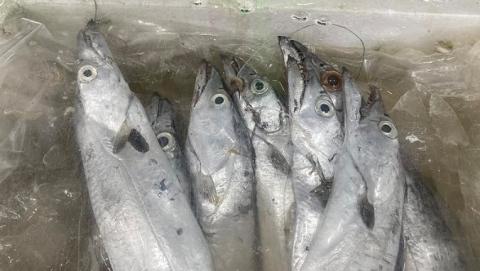 """夏令热线丨洗带鱼成了""""拆炸弹"""",挂着鱼钩的带鱼真的是海钓上来的吗?"""