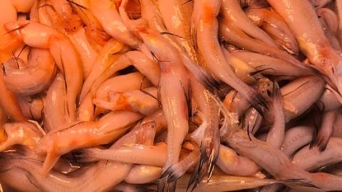 """夏令热线丨""""上农批""""内售卖龙头鱼,休渔期内难道是偷捕而来?"""