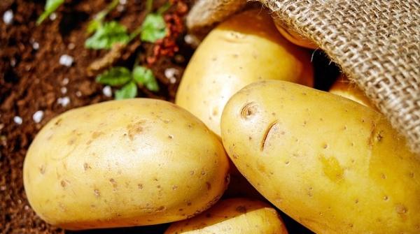 十日谈   亲亲土豆