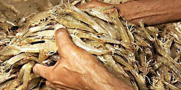 约1000个集装箱印度冻虾被中国退货 印媒政治化恶炒