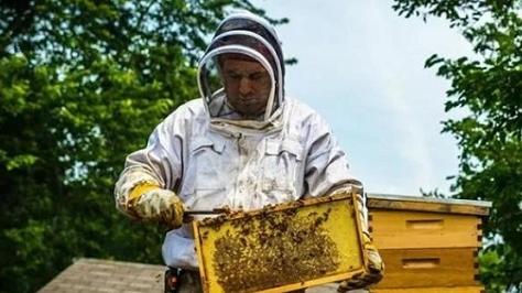 """蜂巢被毁、霜冻严重、病害爆发,那些人们热爱的食物今年都迎来了""""黑色之年"""""""