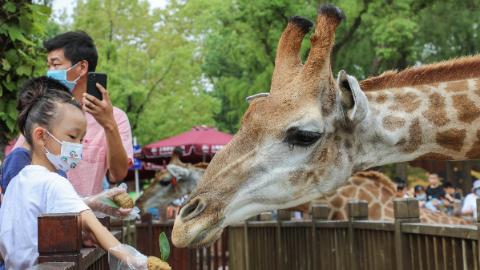 """吃""""月饼""""过中秋 上海野生动物园的动物们成了""""美食家"""""""