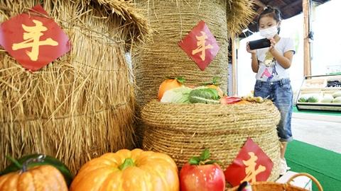 2021年中国农民丰收节上海主会场在松江举行:活动持续至9月26日 免费开放