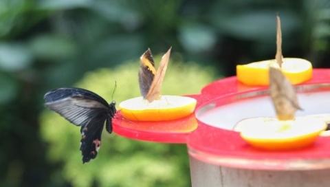 上海动物园第九届蝴蝶展开幕,上午放飞数千只蝴蝶