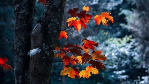 """""""秋""""是一位话题王"""